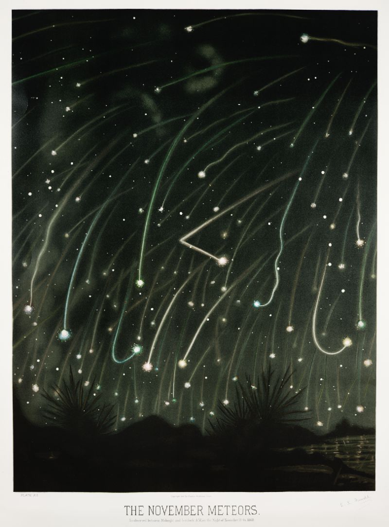 The November meteors from the Trouvelot astronomical drawings (1881-1882)