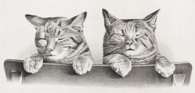 Cats (1874)