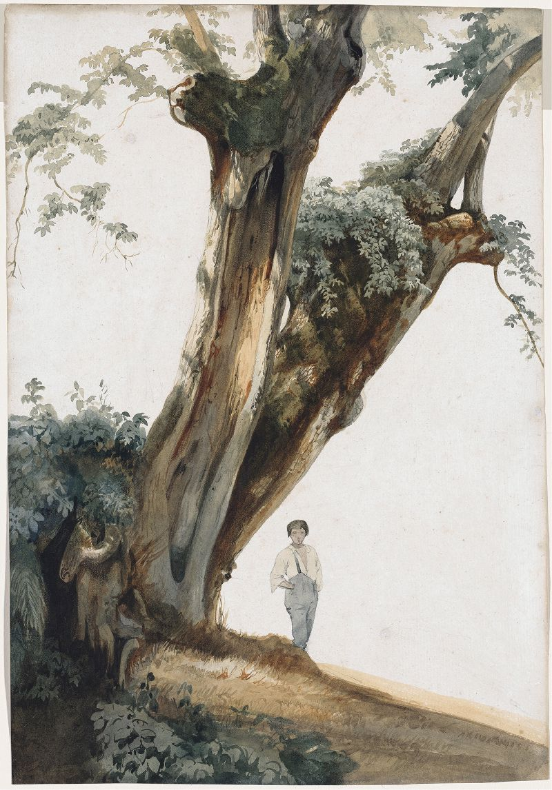 Ancient Trees in the Roman Campagna (1850s)
