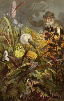 Die Insekten, Tausendfüssler und Spinnen Pl 18 (1877)
