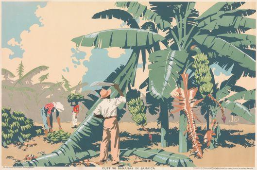 Cutting Bananas In Jamaica (1930)
